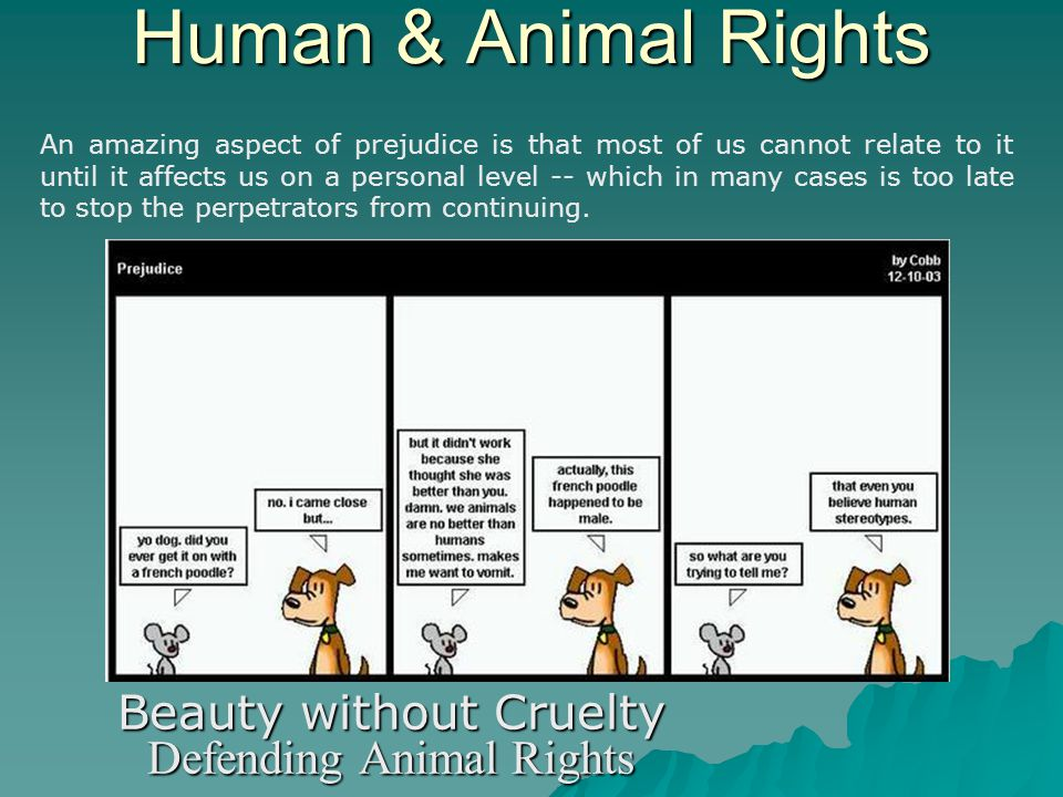 Human & Animal Rights Beauty without Cruelty Defending Animal Rights An amazing aspect of prejudice is that most of us cannot relate to it until it affects us on a personal level -- which in many cases is too late to stop the perpetrators from continuing.