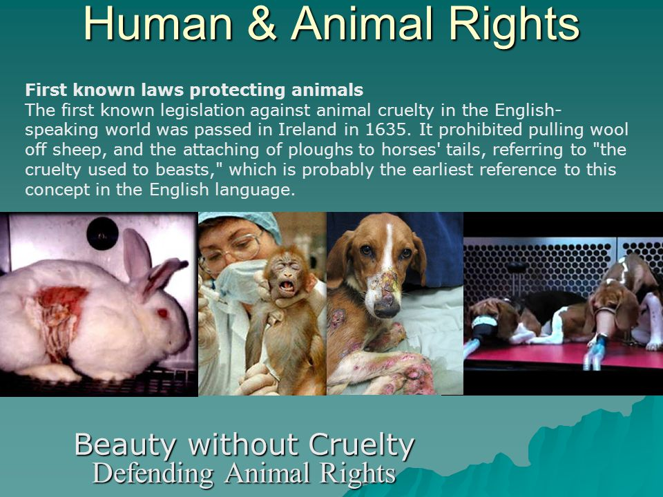 Human & Animal Rights Beauty without Cruelty Defending Animal Rights First known laws protecting animals The first known legislation against animal cruelty in the English- speaking world was passed in Ireland in 1635.
