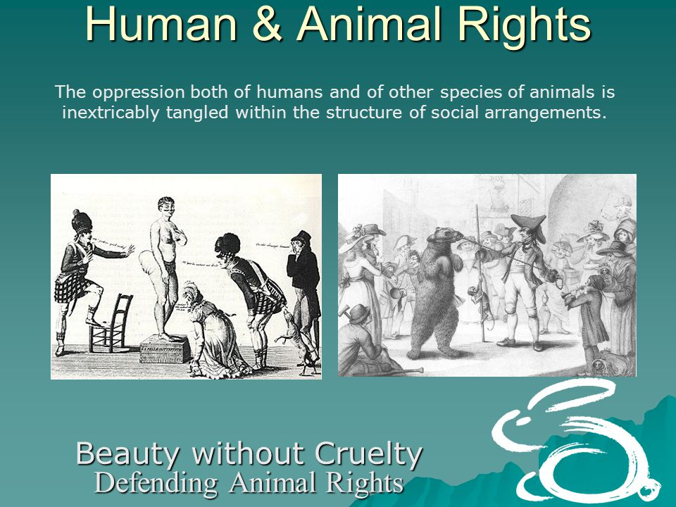 Human & Animal Rights Beauty without Cruelty Defending Animal Rights The oppression both of humans and of other species of animals is inextricably tangled within the structure of social arrangements.