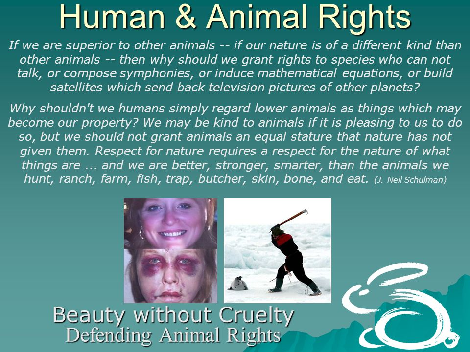 Human & Animal Rights Beauty without Cruelty Defending Animal Rights If we are superior to other animals -- if our nature is of a different kind than other animals -- then why should we grant rights to species who can not talk, or compose symphonies, or induce mathematical equations, or build satellites which send back television pictures of other planets.