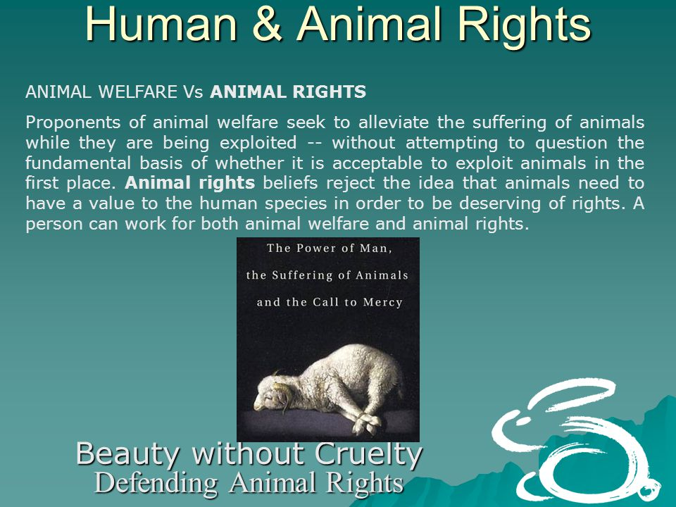 Human & Animal Rights Beauty without Cruelty Defending Animal Rights ANIMAL WELFARE Vs ANIMAL RIGHTS Proponents of animal welfare seek to alleviate the suffering of animals while they are being exploited -- without attempting to question the fundamental basis of whether it is acceptable to exploit animals in the first place.