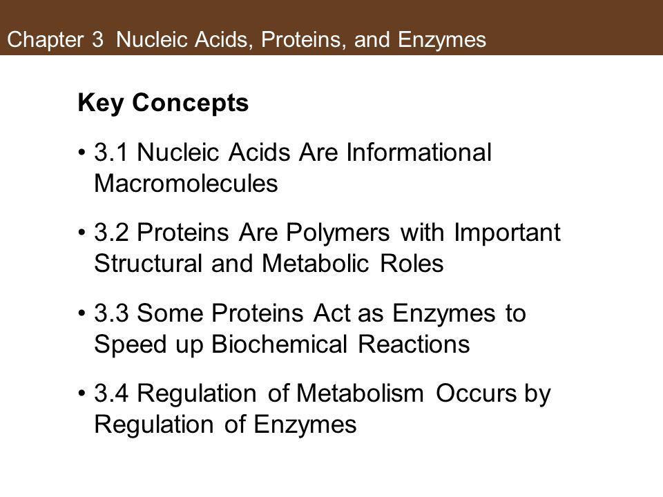 Concept 3.1 Nucleic Acids Are Informational Macromolecules Base pairs are linked by hydrogen bonds.