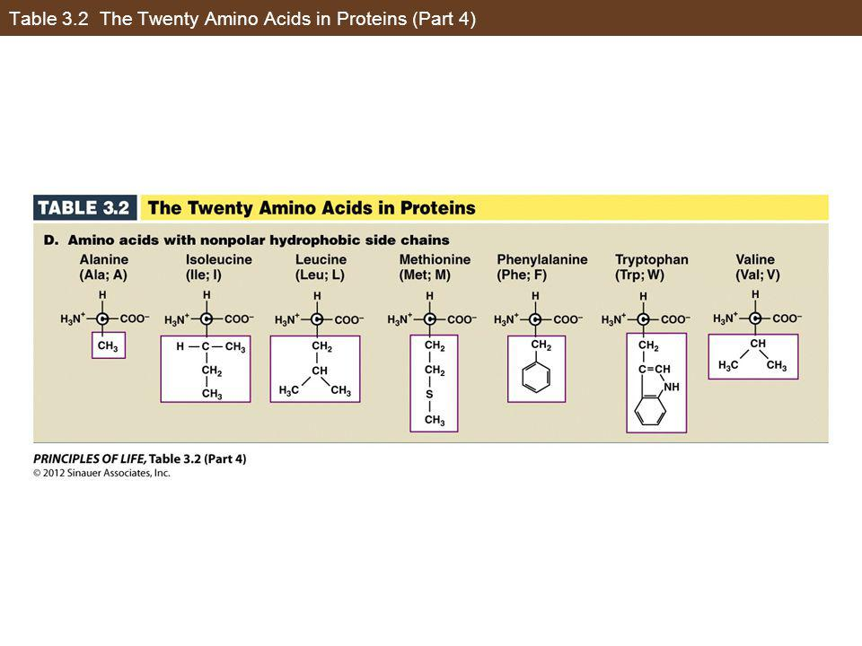 Table 3.2 The Twenty Amino Acids in Proteins (Part 4)