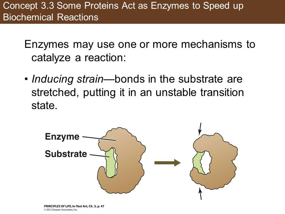 Concept 3.3 Some Proteins Act as Enzymes to Speed up Biochemical Reactions Enzymes may use one or more mechanisms to catalyze a reaction: Inducing str