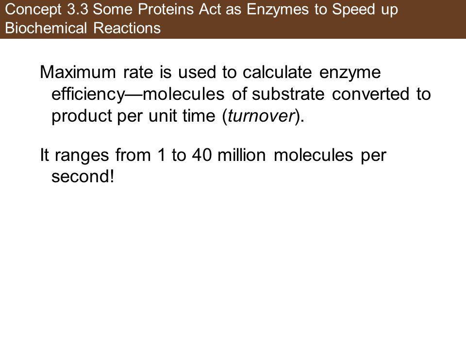 Concept 3.3 Some Proteins Act as Enzymes to Speed up Biochemical Reactions Maximum rate is used to calculate enzyme efficiencymolecules of substrate c