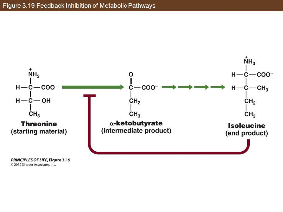 Figure 3.19 Feedback Inhibition of Metabolic Pathways