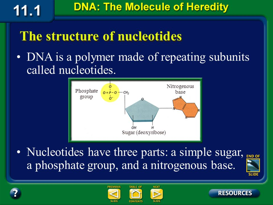 Section 11.1 Summary – pages 281 - 287 Hershey and Chase labeled the virus DNA with a radioactive isotope and the virus protein with a different isoto