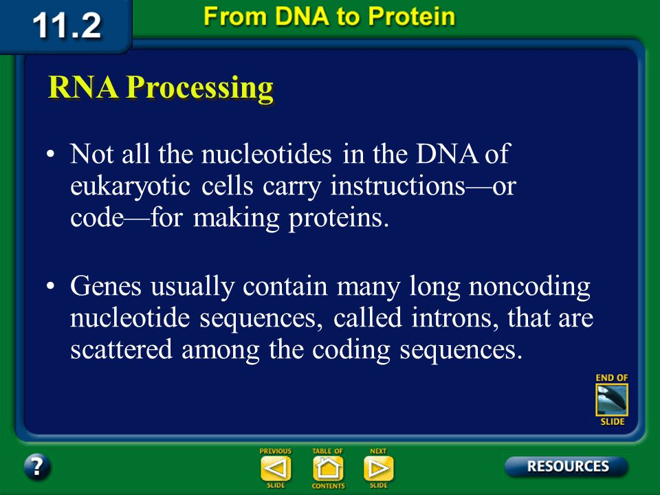 Section 11.2 Summary – pages 288 - 295 Transcription The main difference between transcription and DNA replication is that transcription results in th