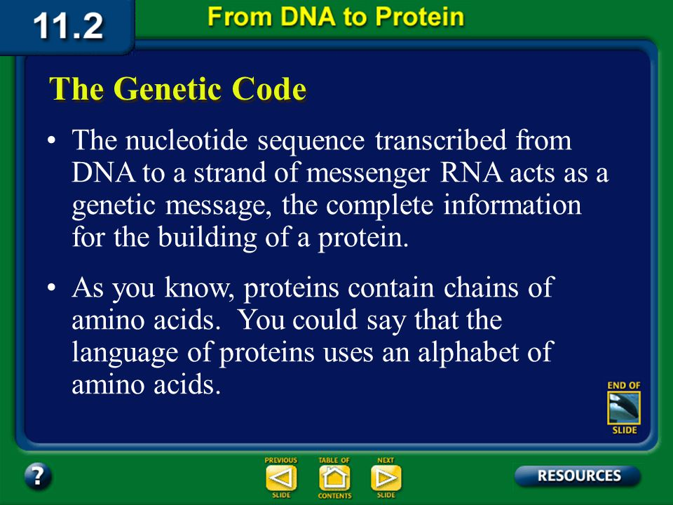 Section 11.2 Summary – pages 288 - 295 Enzymes in the nucleus cut out the intron segments and paste the mRNA back together. The mRNA then leaves the n