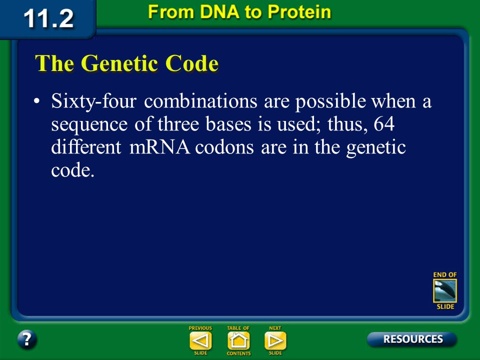 Biochemists began to crack the genetic code when they discovered that a group of three nitrogenous bases in mRNA code for one amino acid. Each group i