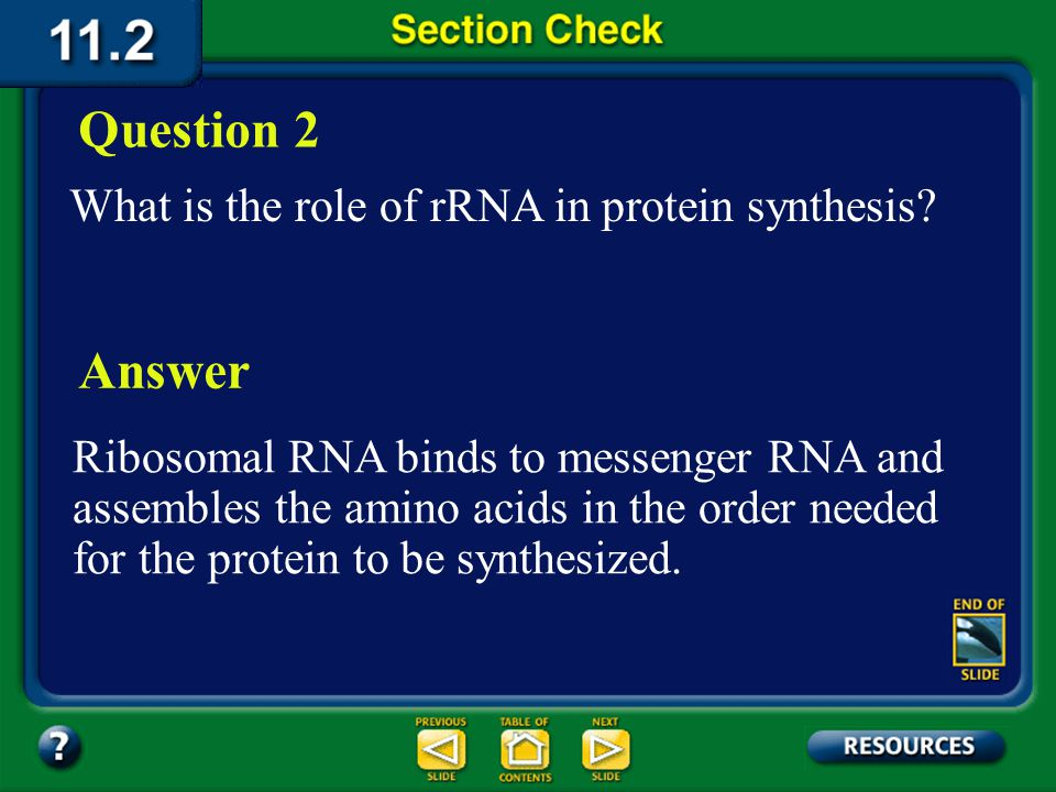 Section 2 Check What are the three chemical differences between RNA and DNA? Question 1 Answer RNA consists of a single strand of nucleotides whereas