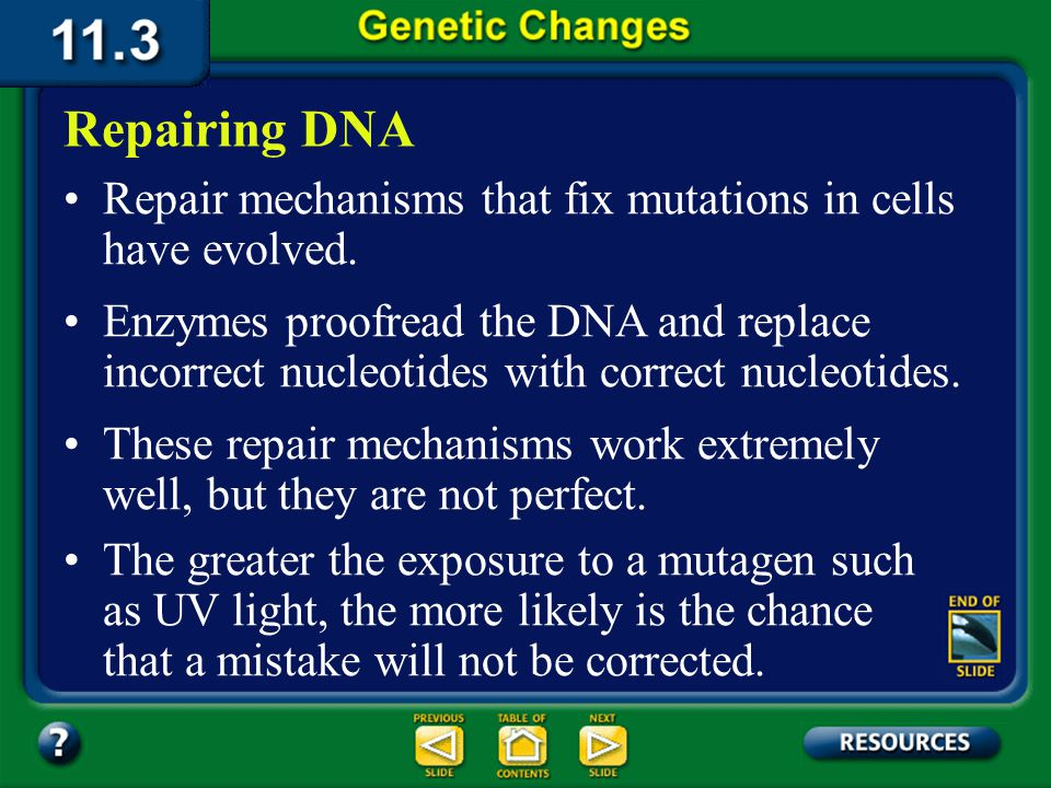 11.3 Section Summary 6.3 – pages 296 - 301 Causes of Mutations The breaking and reforming of a double- stranded DNA molecule can result in deletions.