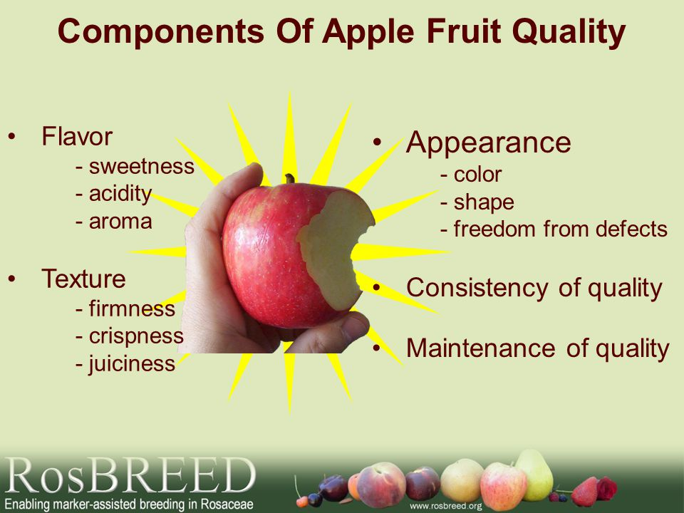 Components Of Apple Fruit Quality Flavor -sweetness -acidity -aroma Texture -firmness -crispness -juiciness Appearance -color -shape -freedom from def
