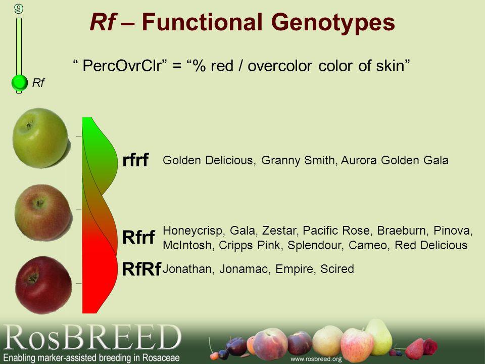 Rf – Functional Genotypes Rf PercOvrClr = % red / overcolor color of skin Golden Delicious, Granny Smith, Aurora Golden Gala Honeycrisp, Gala, Zestar,