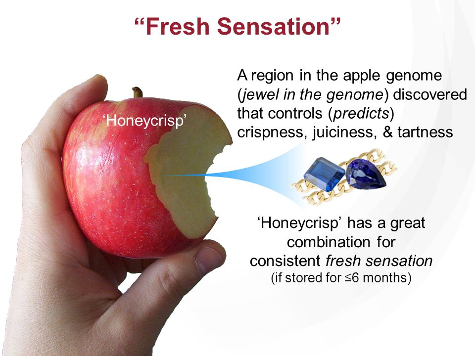 Fresh Sensation Honeycrisp has a great combination for consistent fresh sensation (if stored for 6 months) Honeycrisp A region in the apple genome (je