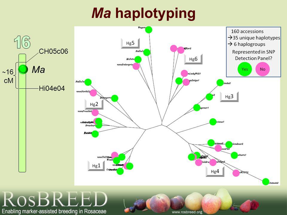 Ma haplotyping Ma CH05c06 Hi04e04 ~ 16 cM