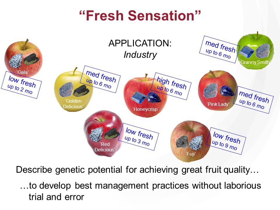 APPLICATION: Industry Honeycrisp Granny Smith Gala Pink Lady Fuji Golden Delicious high fresh up to 6 mo low fresh up to 2 mo med fresh up to 6 mo low