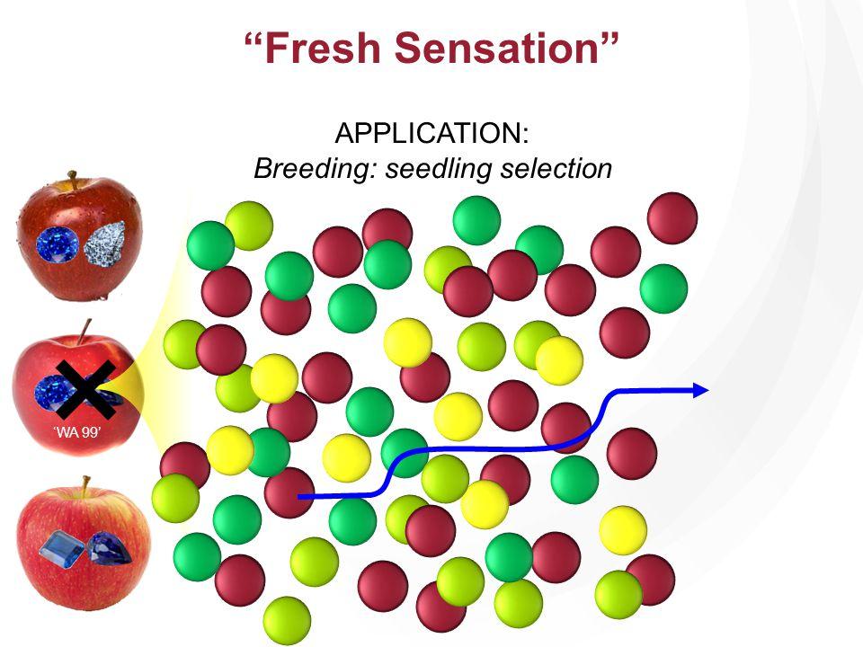 WA 99 APPLICATION: Breeding: seedling selection × Fresh Sensation