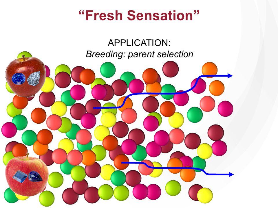 APPLICATION: Breeding: parent selection Fresh Sensation