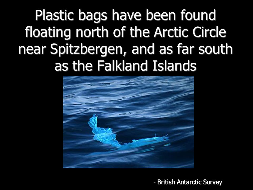 Plastic bags have been found floating north of the Arctic Circle near Spitzbergen, and as far south as the Falkland Islands - British Antarctic Survey