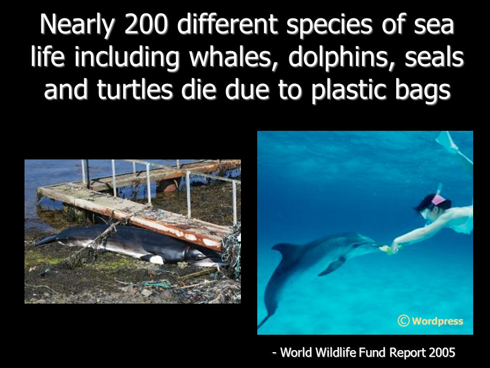 Nearly 200 different species of sea life including whales, dolphins, seals and turtles die due to plastic bags - World Wildlife Fund Report 2005