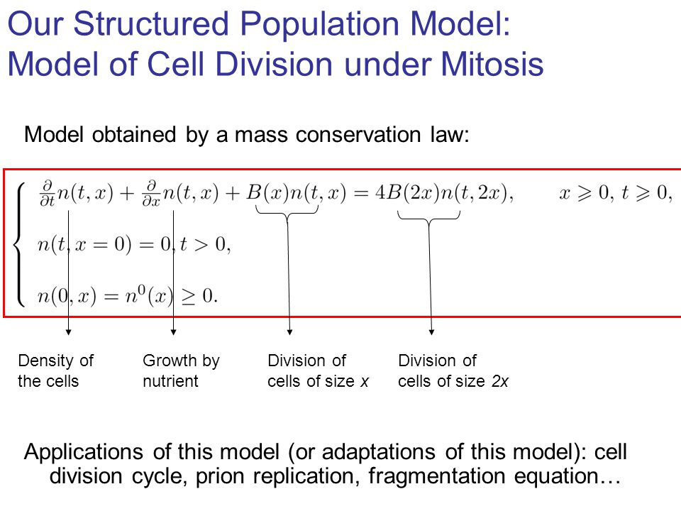 Several requirements: A.Avoid instability B.Conserve main properties of the continuous model: laws for the increase - of biomass: - of number of cells, e.g.