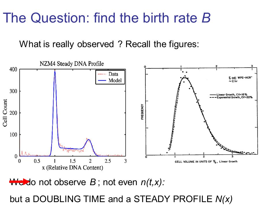 Marie DOUMIC - CancerSim2008 May,19th Our approach: Use the stable size distribution This uses recent results on Generalised Relative Entropy: refer for instance to B.
