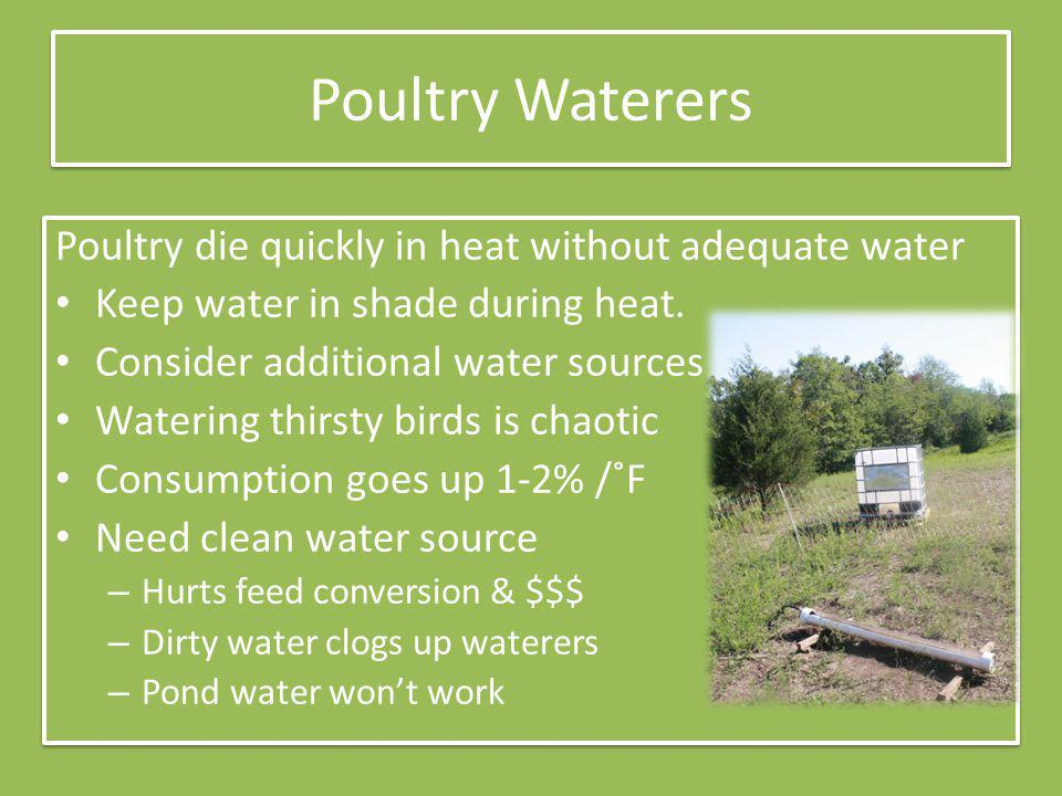 Poultry Waterers Poultry die quickly in heat without adequate water Keep water in shade during heat.