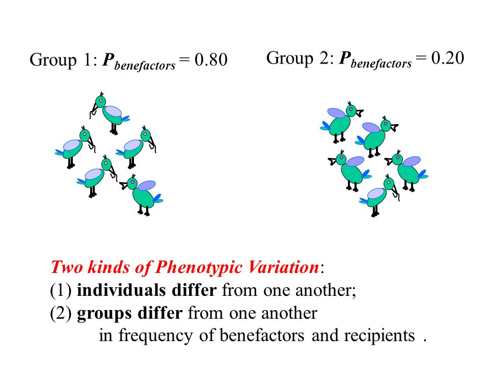 Group 1: P benefactors = 0.80 Group 2: P benefactors = 0.20 Two kinds of Phenotypic Variation: (1) individuals differ from one another; (2) groups differ from one another in frequency of benefactors and recipients.
