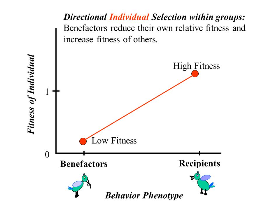Benefactors 0 1 Directional Individual Selection within groups: Benefactors reduce their own relative fitness and increase fitness of others.