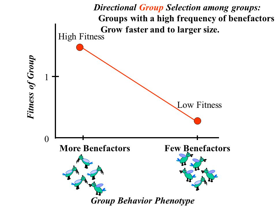 More Benefactors 0 1 Directional Group Selection among groups: Groups with a high frequency of benefactors Grow faster and to larger size.