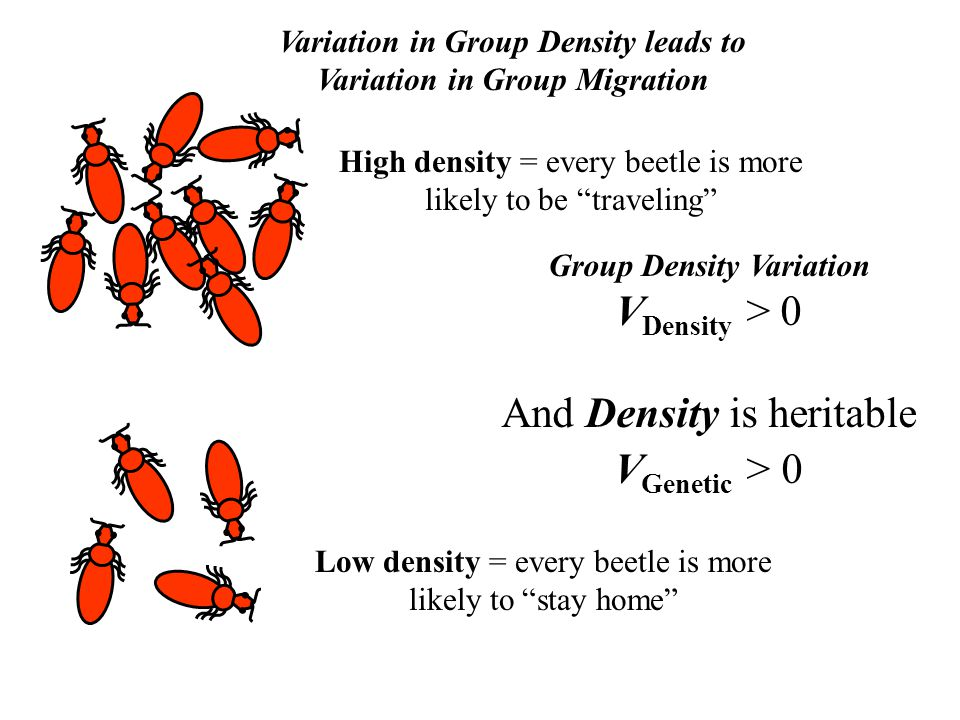Variation in Group Density leads to Variation in Group Migration Low density = every beetle is more likely to stay home High density = every beetle is more likely to be traveling Group Density Variation V Density > 0 And Density is heritable V Genetic > 0