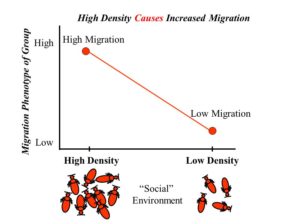 High Density Low High High Density Causes Increased Migration Low Migration High Migration Migration Phenotype of Group Low Density Social Environment