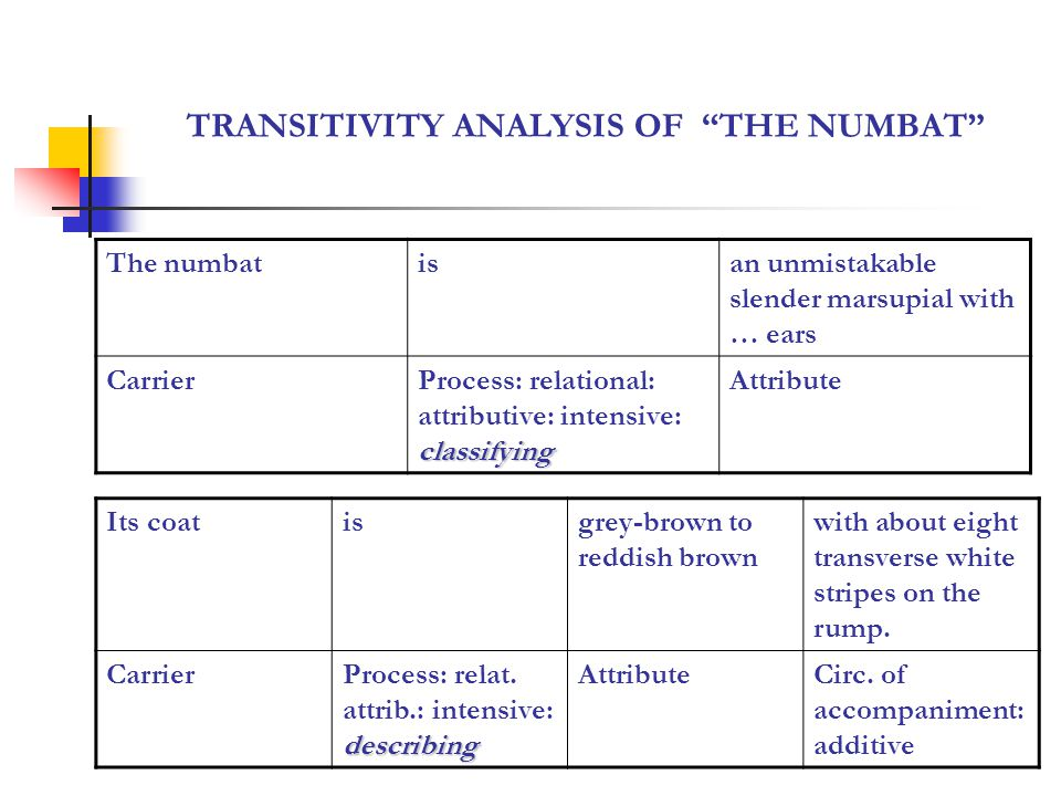 TRANSITIVITY ANALYSIS IN A TEXT THE NUMBAT Itsheltersin hollow logs ActorProcess: material middle Circumstance of location: spatial location The numbatisdifferent in being active during the day Carrier describing Process: relational: attributive: intensive describing Attribute