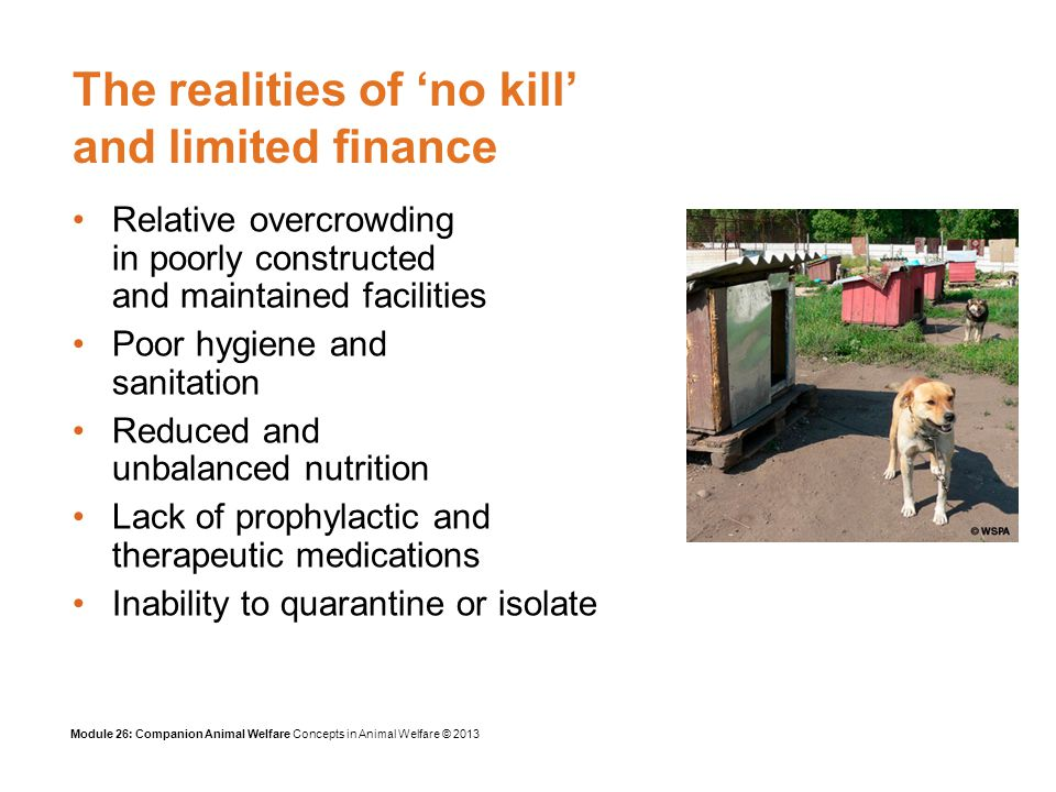 Module 26: Companion Animal Welfare Concepts in Animal Welfare © 2013 The realities of no kill and limited finance Relative overcrowding in poorly constructed and maintained facilities Poor hygiene and sanitation Reduced and unbalanced nutrition Lack of prophylactic and therapeutic medications Inability to quarantine or isolate