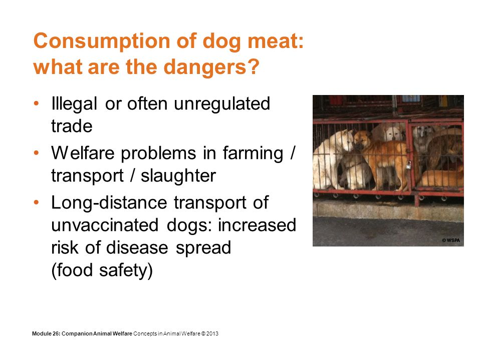 Module 26: Companion Animal Welfare Concepts in Animal Welfare © 2013 Consumption of dog meat: what are the dangers.