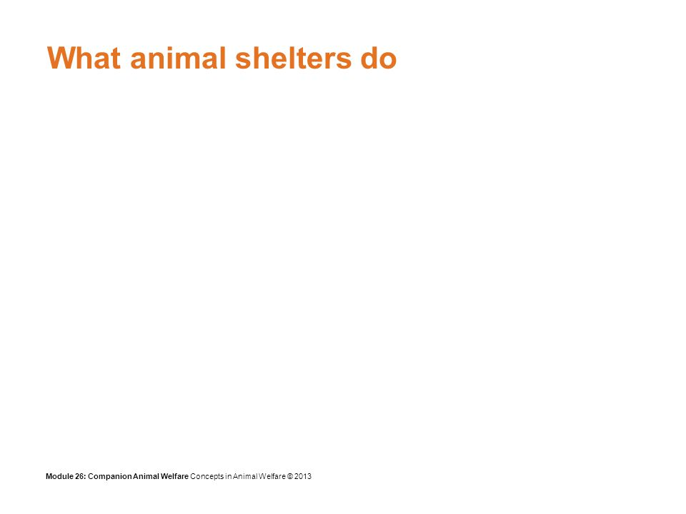 Module 26: Companion Animal Welfare Concepts in Animal Welfare © 2013 Background Limited resources Many are overwhelmed by incoming strays Cannot plan longer-term solutions Often run by volunteers, motivated by a genuine desire to save animals Veterinary input varies