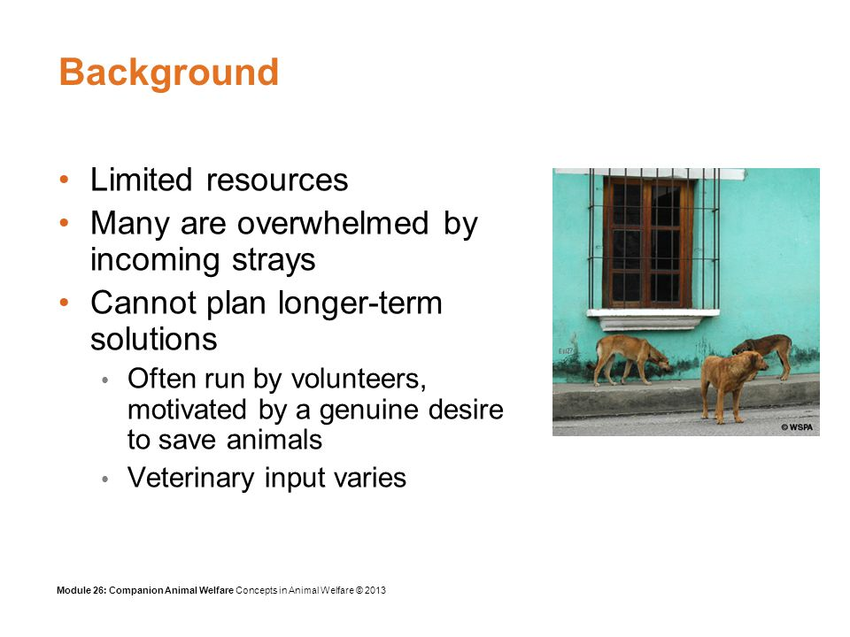 Module 26: Companion Animal Welfare Concepts in Animal Welfare © 2013 Welfare problems with advanced veterinary therapy Advances in veterinary science may follow some years behind those in human medicine In affluent societies, pet owners demand similar therapies for their pets as for themselves Is there a danger of sometimes providing a service to the owner for financial gain rather than considering the welfare of the pet.