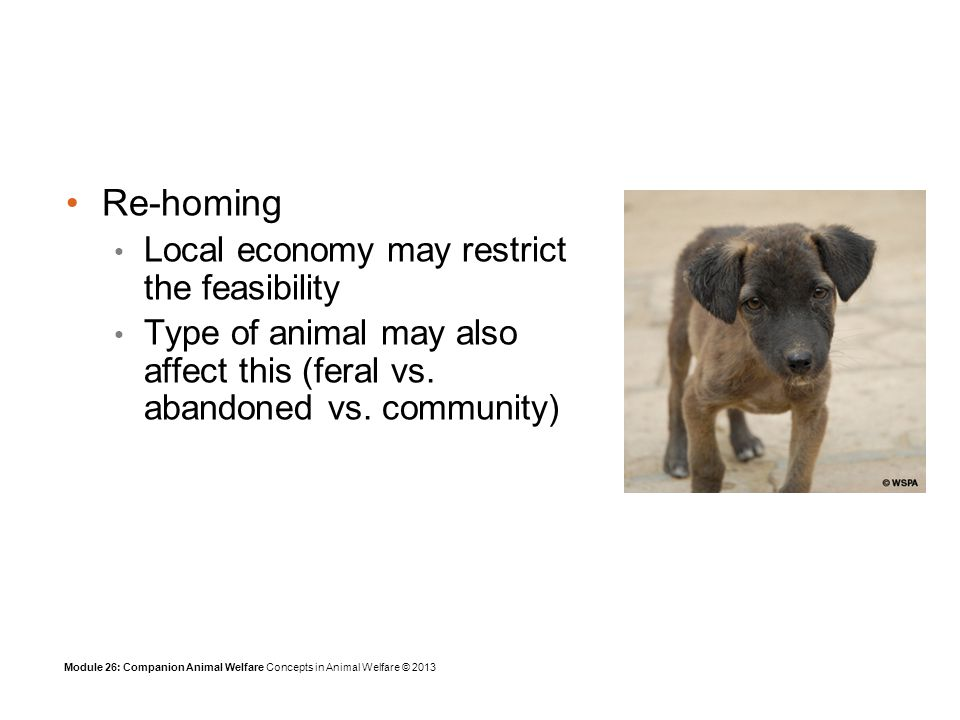 Module 26: Companion Animal Welfare Concepts in Animal Welfare © 2013 Re-homing Local economy may restrict the feasibility Type of animal may also affect this (feral vs.