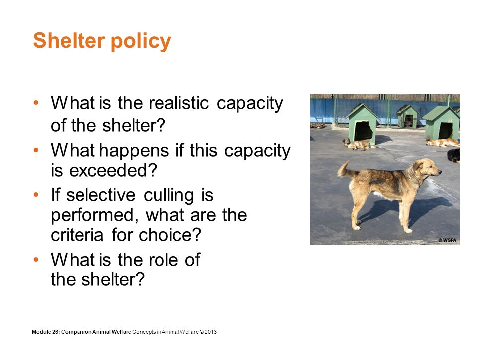 Module 26: Companion Animal Welfare Concepts in Animal Welfare © 2013 Summary What animal shelters do Aggressive dogs Welfare problems in the pet trade Welfare problems caused by breeding and showing pets Welfare problems caused by veterinary treatments Welfare problems caused by eating dogs