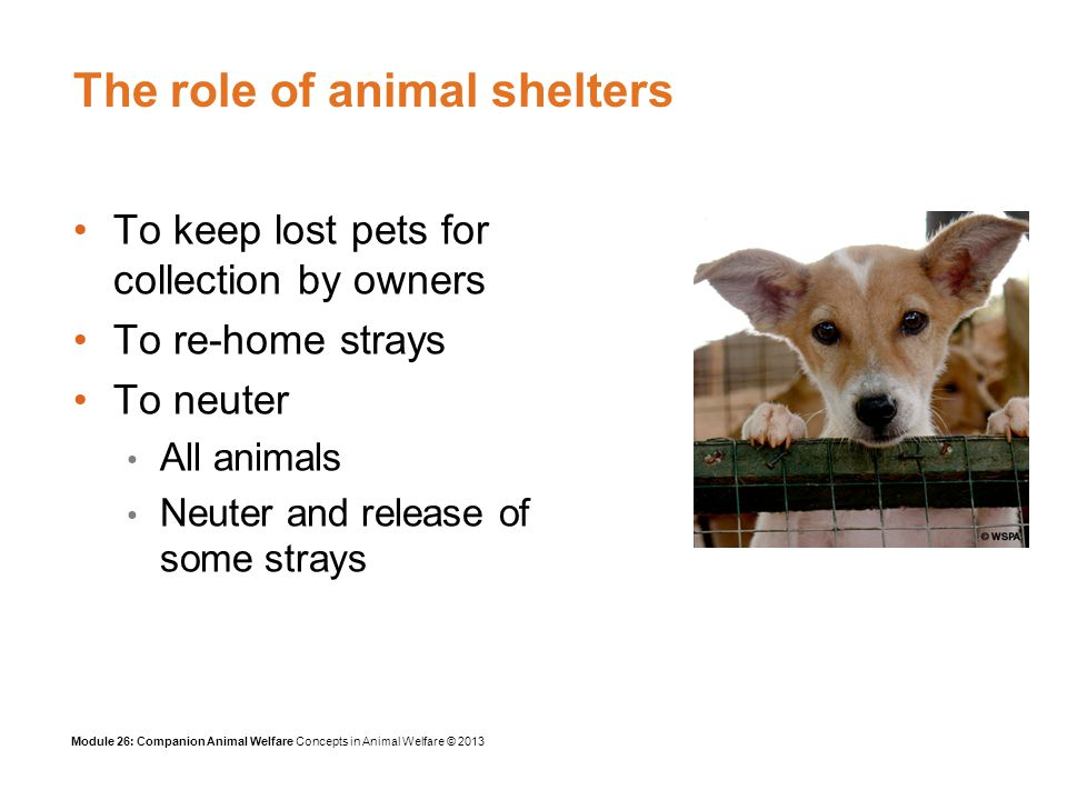 Module 26: Companion Animal Welfare Concepts in Animal Welfare © 2013 The role of animal shelters To keep lost pets for collection by owners To re-home strays To neuter All animals Neuter and release of some strays