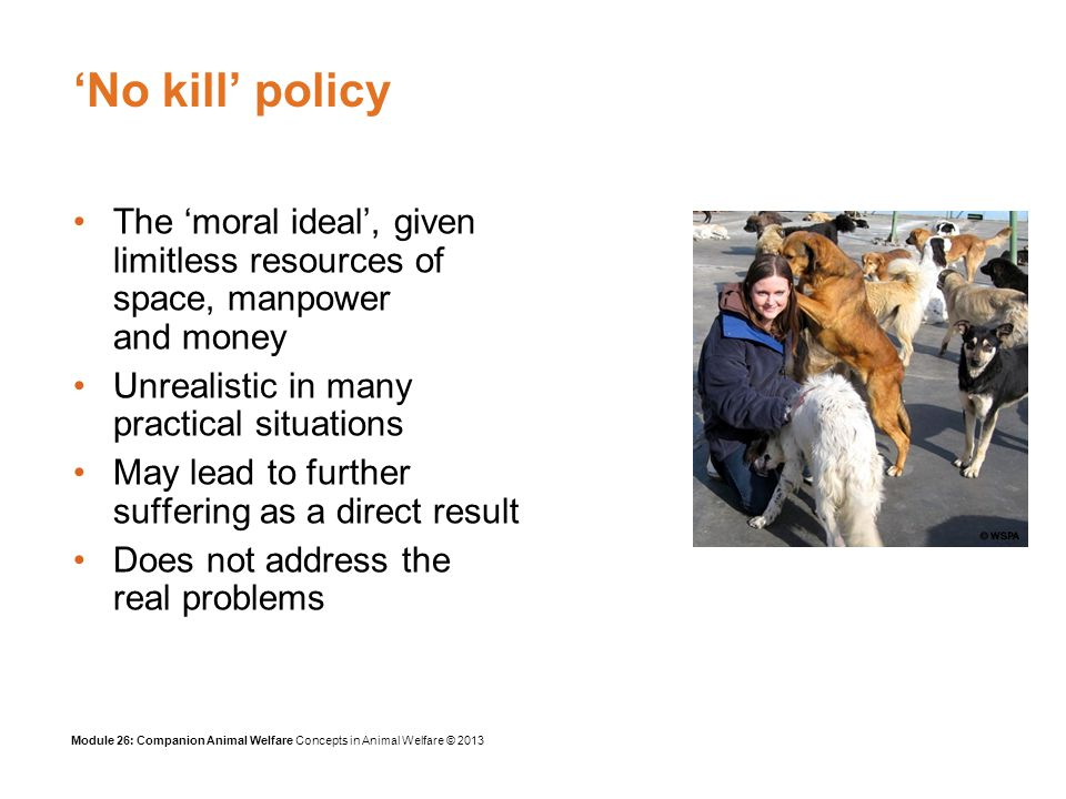 Module 26: Companion Animal Welfare Concepts in Animal Welfare © 2013 References Asher, L., Diesel, G., Summers, J.