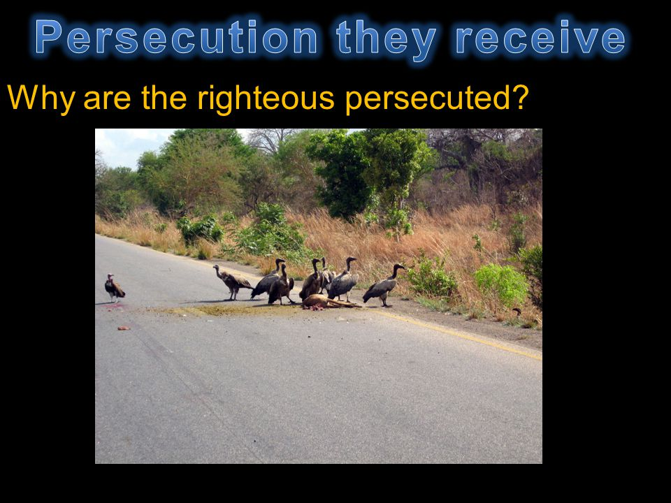 Why are the righteous persecuted?