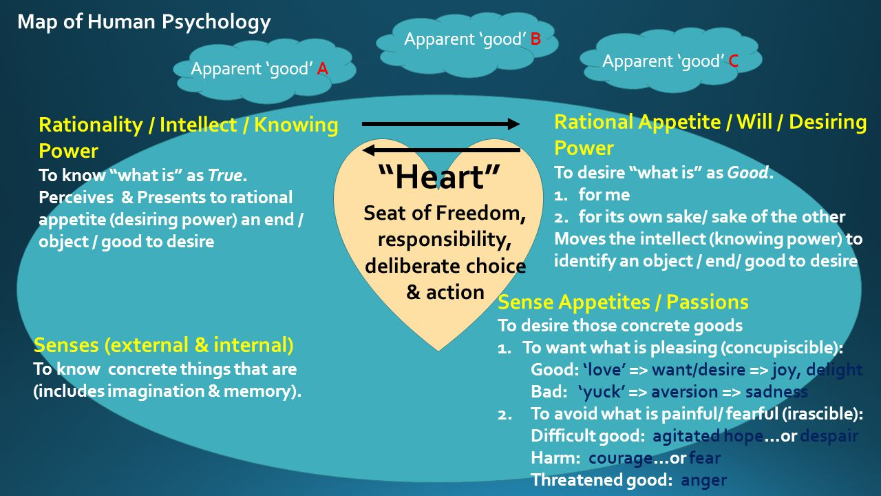 Map of Human Psychology Rational Appetite / Will / Desiring Power To desire what is as Good.