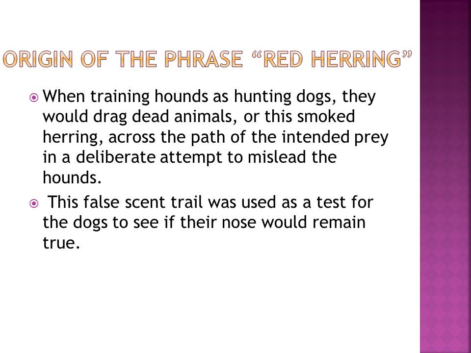 When training hounds as hunting dogs, they would drag dead animals, or this smoked herring, across the path of the intended prey in a deliberate attem