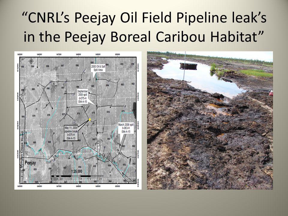 CNRLs Peejay Oil Field Pipeline leaks in the Peejay Boreal Caribou Habitat