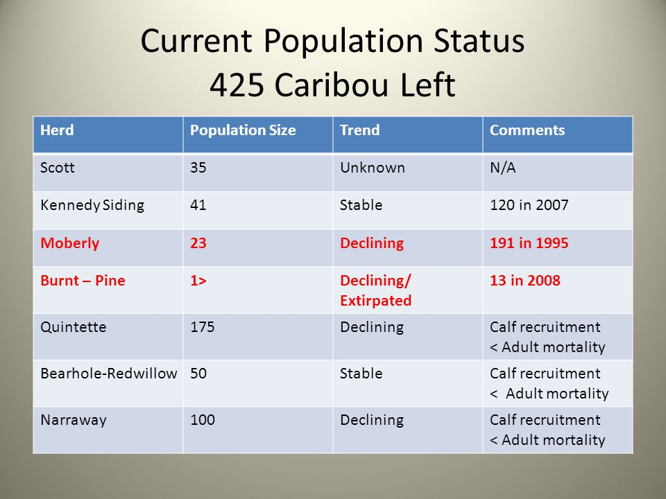 Current Population Status 425 Caribou Left HerdPopulation SizeTrendComments Scott35UnknownN/A Kennedy Siding41Stable120 in 2007 Moberly23Declining191 in 1995 Burnt – Pine1>Declining/ Extirpated 13 in 2008 Quintette175DecliningCalf recruitment < Adult mortality Bearhole-Redwillow50StableCalf recruitment < Adult mortality Narraway100DecliningCalf recruitment < Adult mortality