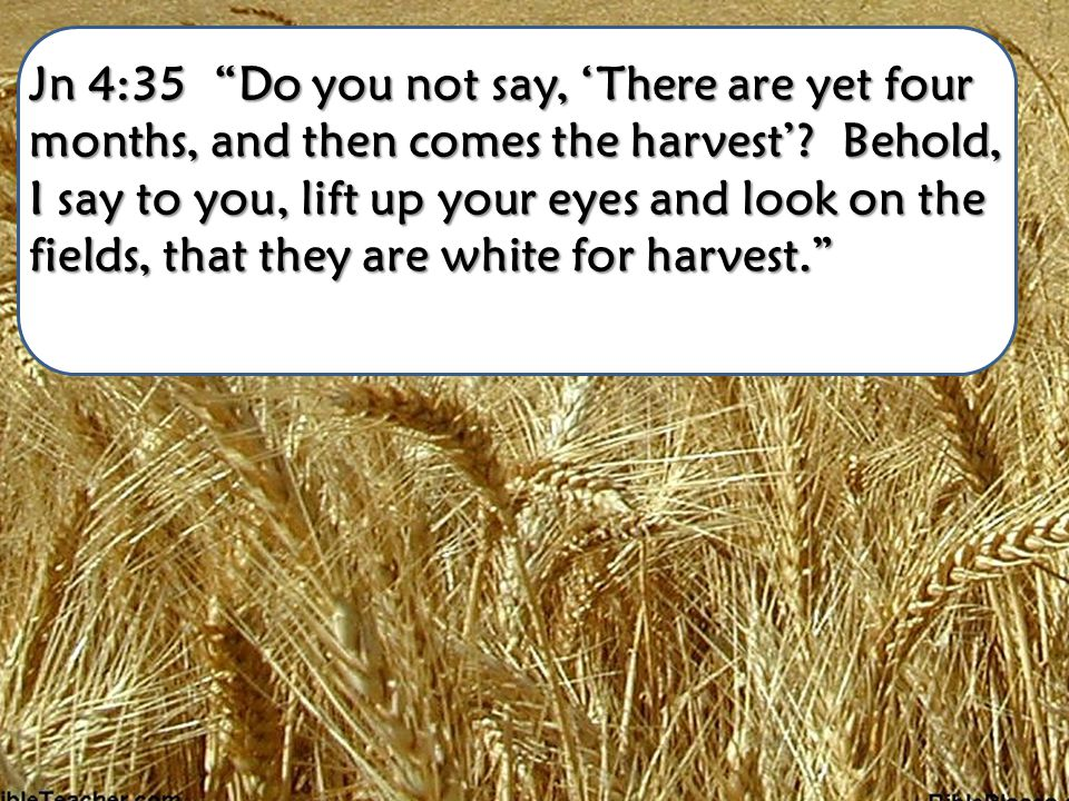 Jn 4:35 Do you not say, There are yet four months, and then comes the harvest? Behold, I say to you, lift up your eyes and look on the fields, that th