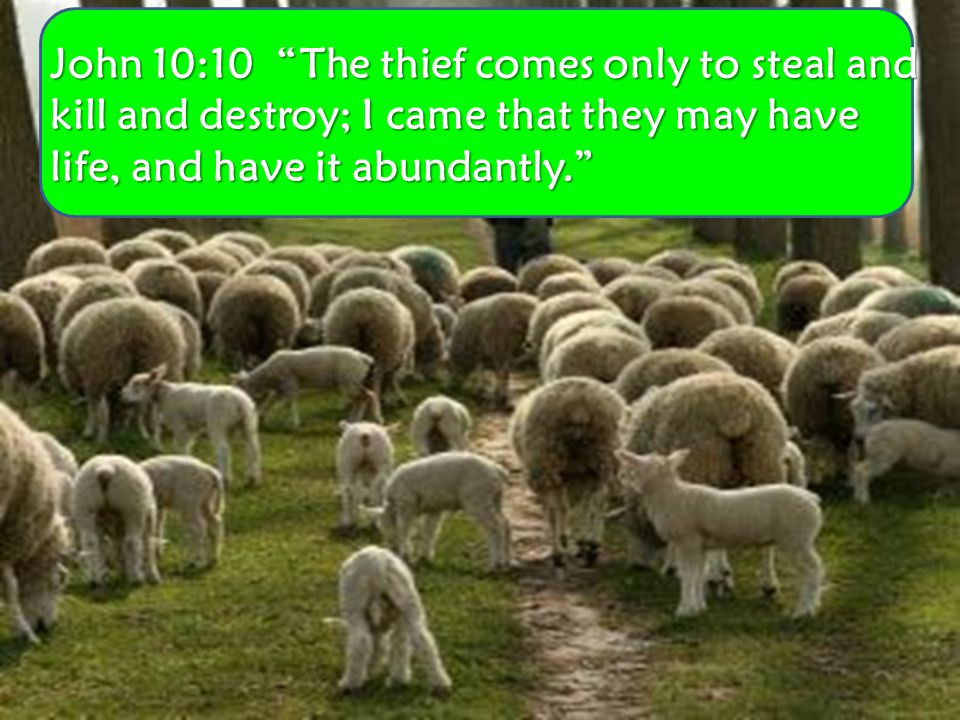 John 10:10 The thief comes only to steal and kill and destroy; I came that they may have life, and have it abundantly.