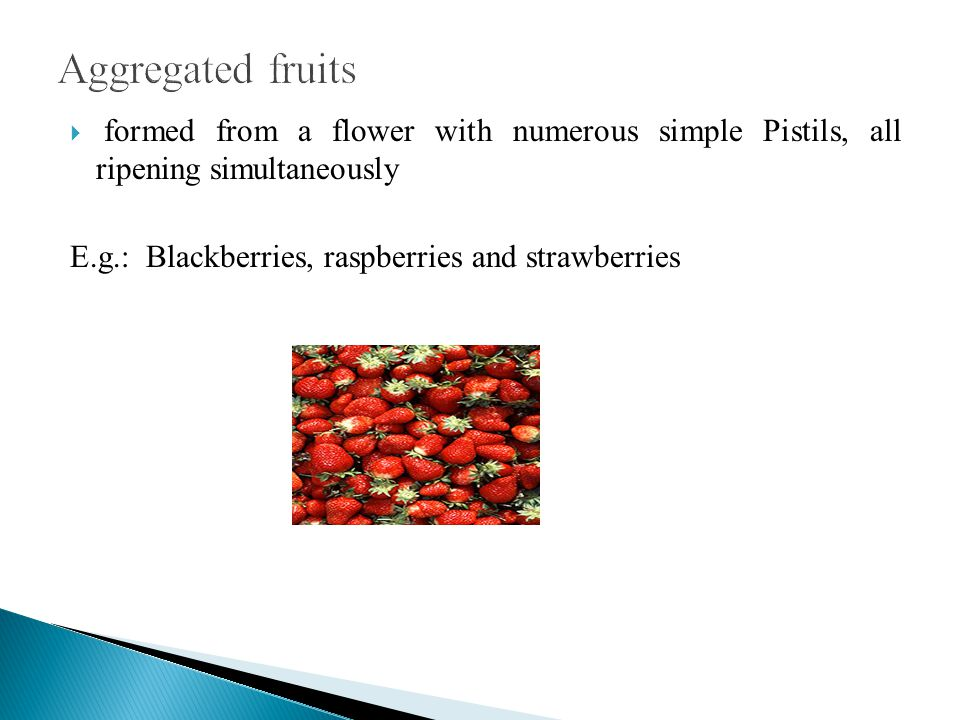 formed from a flower with numerous simple Pistils, all ripening simultaneously E.g.: Blackberries, raspberries and strawberries